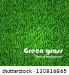 Green grass background. Vector texture - stock photo