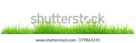 Green grass isolated on white background. Vector illustration - stock vector