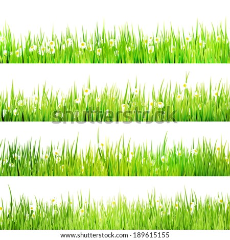 Green grass lush bush with camomiles on white. And also includes EPS 10 vector - stock vector