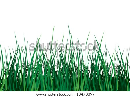 Green grass on white background. Vector illustration. Isolated. - stock vector