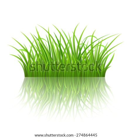 Green grass on white background with reflection, vector illustration - stock vector