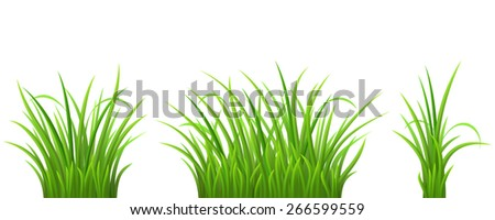 Green grass set on white background, vector illustration - stock vector