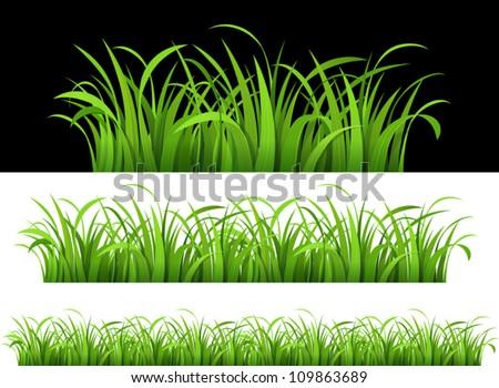 Green grass. Vector illustration - stock vector