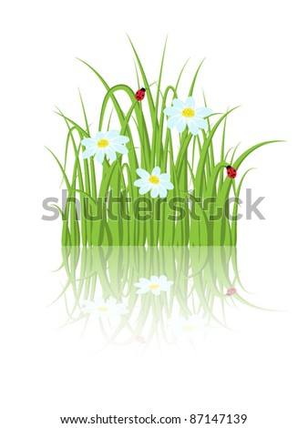 Green grass with daisies and ladybugs - stock vector