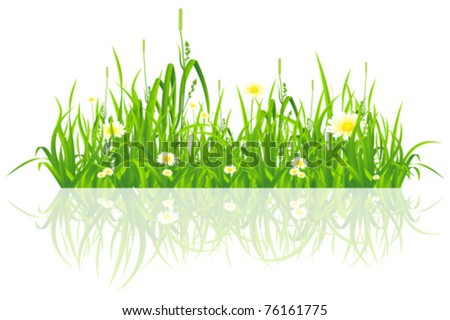 Green grass with flowers isolated on white background