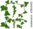 Green ivy vector elements - stock vector