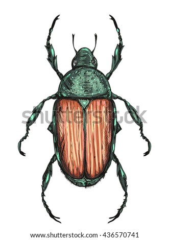 green Japanese beetle isolated on white background. colorful illustration. vector illustration - stock vector