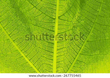 Green Leaf Detail Close-up Vector Illustration - stock vector