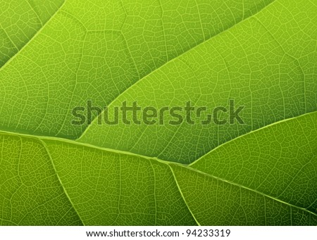 Green leaf texture. Vector background, EPS10 - stock vector