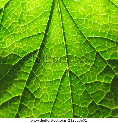 Green leaf texture. Vector. Bright sunny day. - stock vector