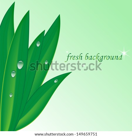 green leaf with dew drops on a light green background.herbal background.vector - stock vector