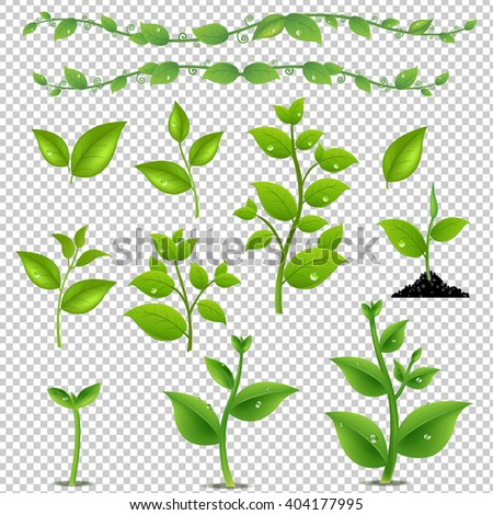 Green Leaves And Plants Set, Isolated on Transparent Background, With Gradient Mesh, Vector Illustration - stock vector