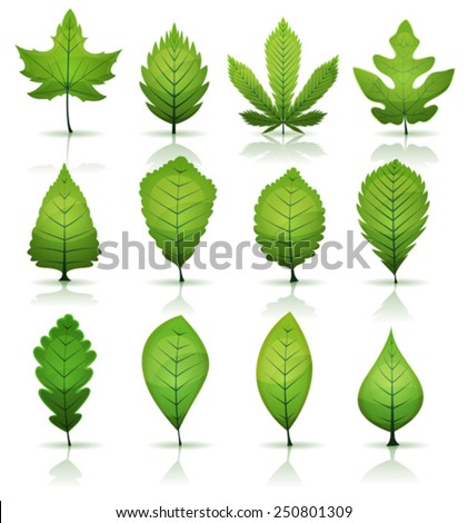 Green Leaves Set/ Illustration of a set of spring or summer season green leaves, from various plants and trees species, laurel, maple, hazel, cannabis, oak or beech - stock vector