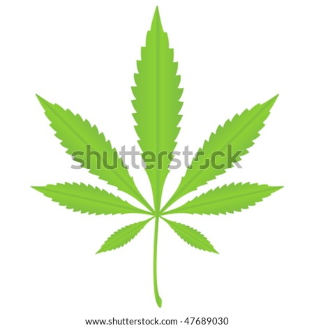 Green marijuana leaf on a white background. Vector illustration.