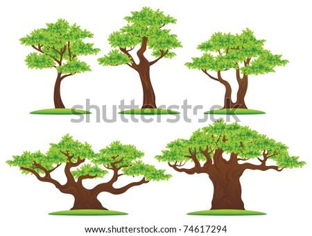 Green oak trees vector illustrations set - stock vector
