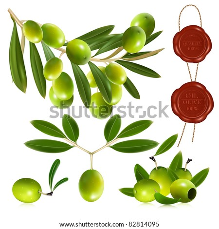 Green olives with leaves. vector illustration - stock vector