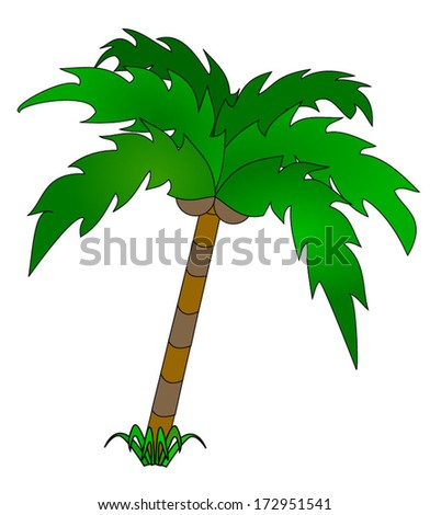 Green palm tree with coconut nuts