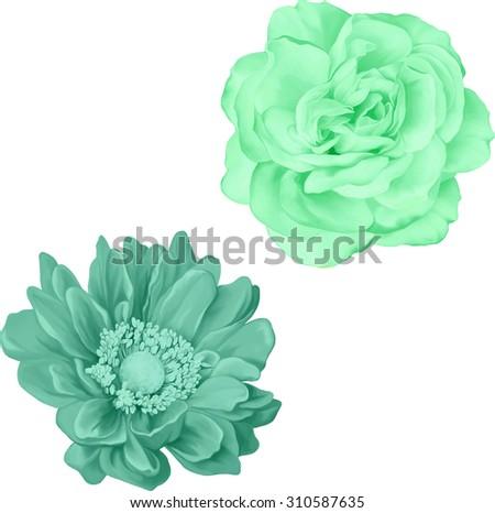 green rose and Mona Lisa flower, Blue flower, Spring flower.Isolated on white background. - stock vector