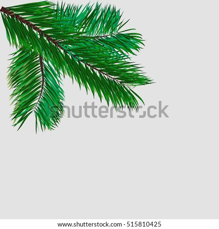 Green sprig of pine branch on white, vector illustration