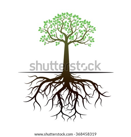 Green Tree and Roots. Vector Illustration. - stock vector