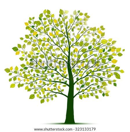 green tree isolated - stock vector