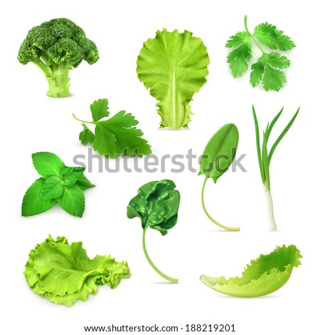 Green vegetables and herbs set, organic vegetarian food, vector illustration isolated on white background - stock vector