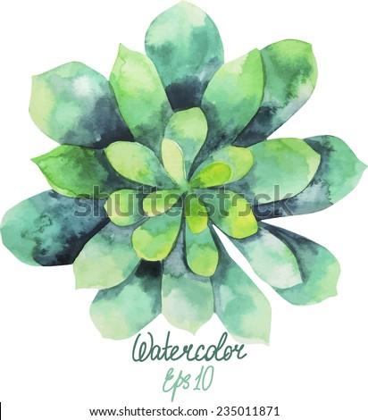 Green watercolor succulent. Vector plant - stock vector