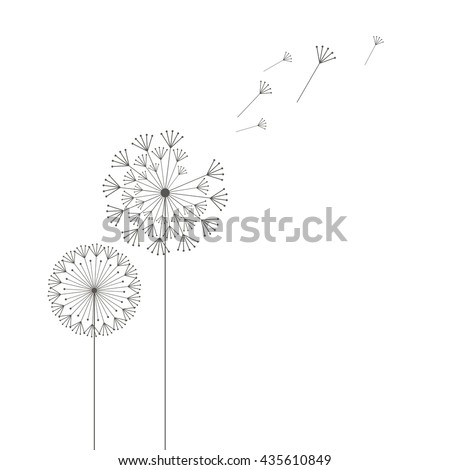 Grey dandelions on white background - stock vector