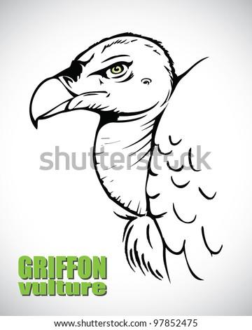 Griffon vulture head - vector illustration - stock vector