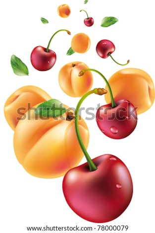 group of apricots and cherries - stock vector