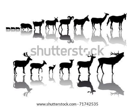 group of hoofed animal - stock vector
