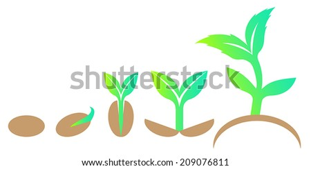Growth stages of sprout from seed. Vector illustration. Design element. Eco concept.