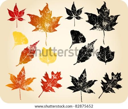 Grunge autumn leaves. Oak, Sycamore, Maple, Sweetgum, Gingko Biloba... - stock vector