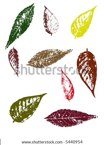 Grunge elements - Autumn Leaves II.   Highly Detailed vector grunge elements - stock vector