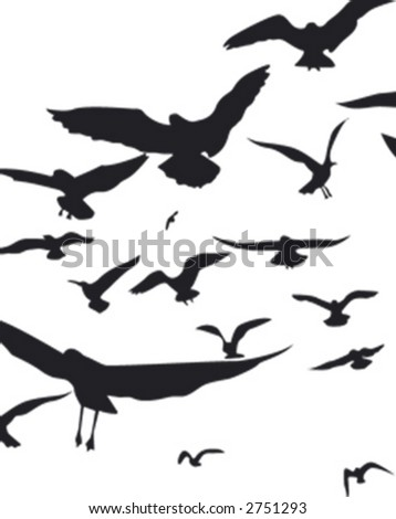 gulls - stock vector