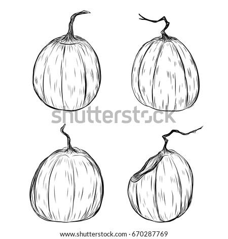 halloween pumpkin by hand drawinghalloween pumpkin sketch vectorset of pumpkin in halloween