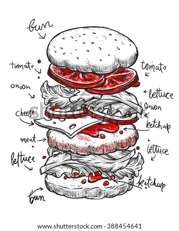 Hamburger ingredients with meat, cheese, tomato, salad, bun, ketchup and lettuce. Classic burger isolated on a white background. Big hamburger with ingredients. Hamburger ingredients with text. - stock vector