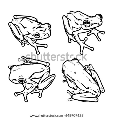 hand draw frog isolated frog vector illustration set of frog outline