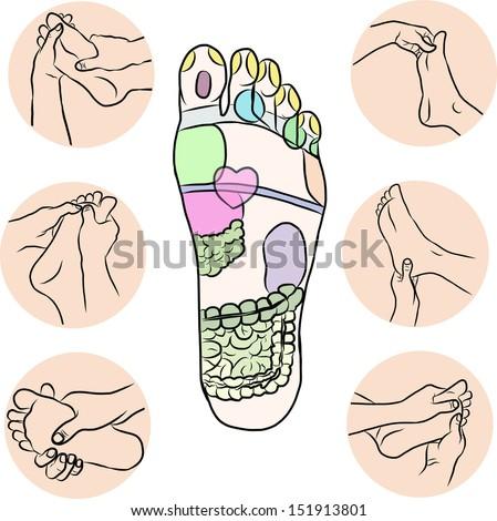 Hand draw Reflexology - stock vector