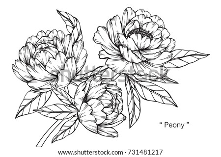 Hand drawing sketch peony flower black stock vector royalty free hand drawing and sketch peony flower black and white with line art illustration mightylinksfo