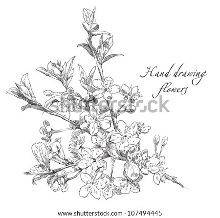 Hand drawing blossom cherry flower - stock vector