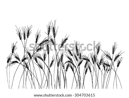 hand drawing ears of rye - stock vector