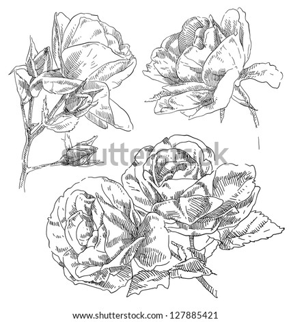Hand drawing flower - stock vector