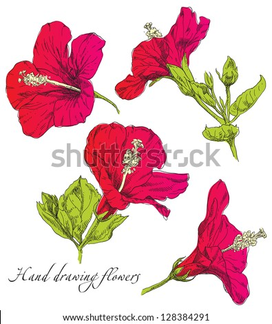Hand drawing Hibiscus flower blossom - stock vector