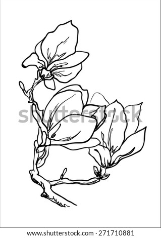 Hand drawing magnolia flowers