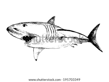 Hand drawing of a shark. Vector illustration - stock vector