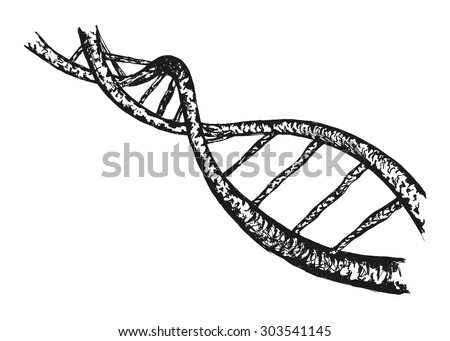 hand drawing of the structure of DNA - stock vector