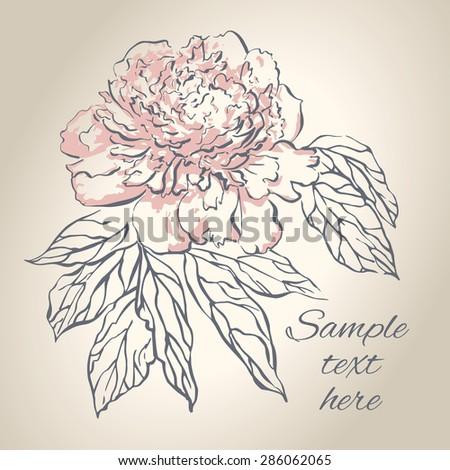 Hand drawing peony flower. Vector illustration