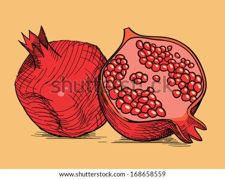 hand drawing red fresh pomegranate - stock vector