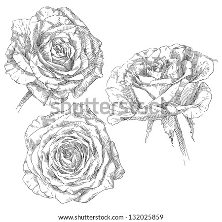 Hand drawing rose flower blossom - stock vector